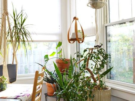 10 plantas decorativas para departamentos