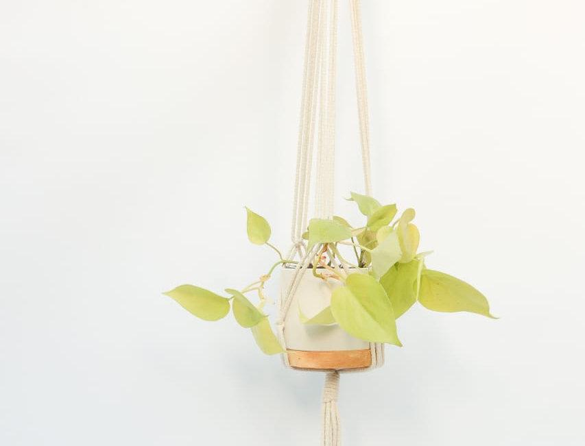 planta de interior en macetas artesanales