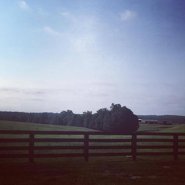 Bull Farm near Archer Lodge