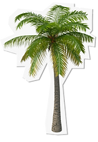 palm tree copy.png
