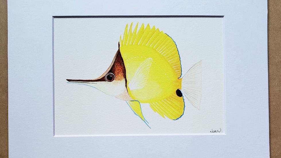 Longnose butterflyfish print