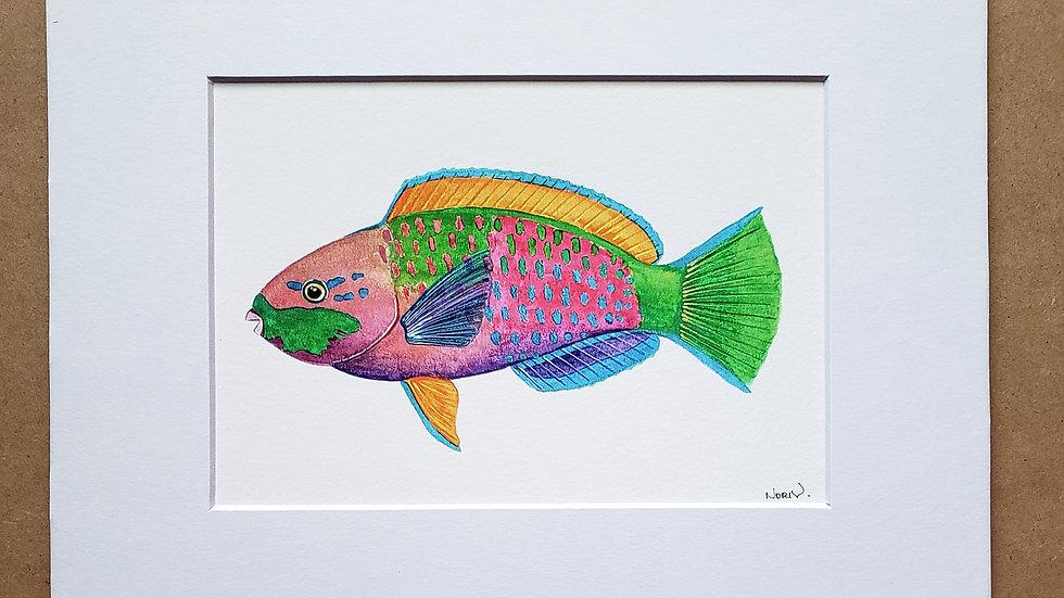 Parrot fish print