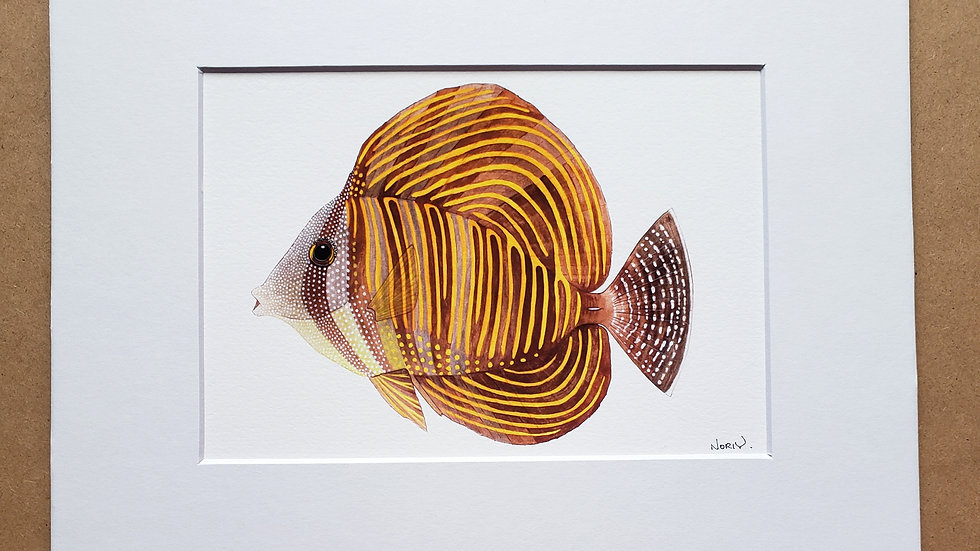 desjardini sailfin tang print