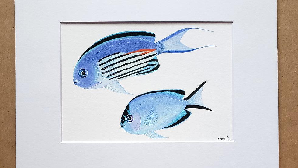 Watanabe's Angelfish print