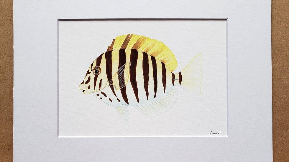 Zebra tang print