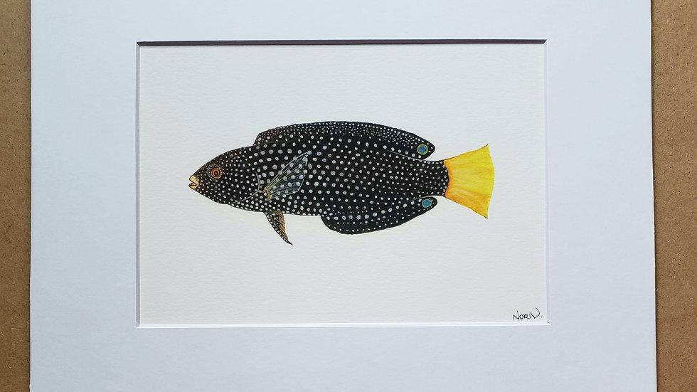 Yellow tail Tamarin wrasse print