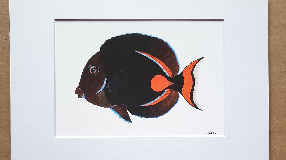 Achillies tang print