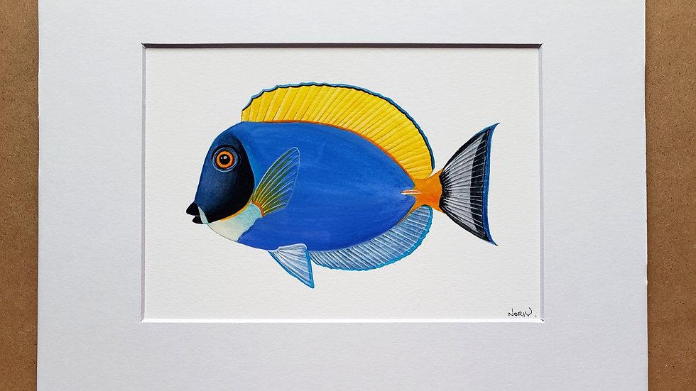Powder blue tang print