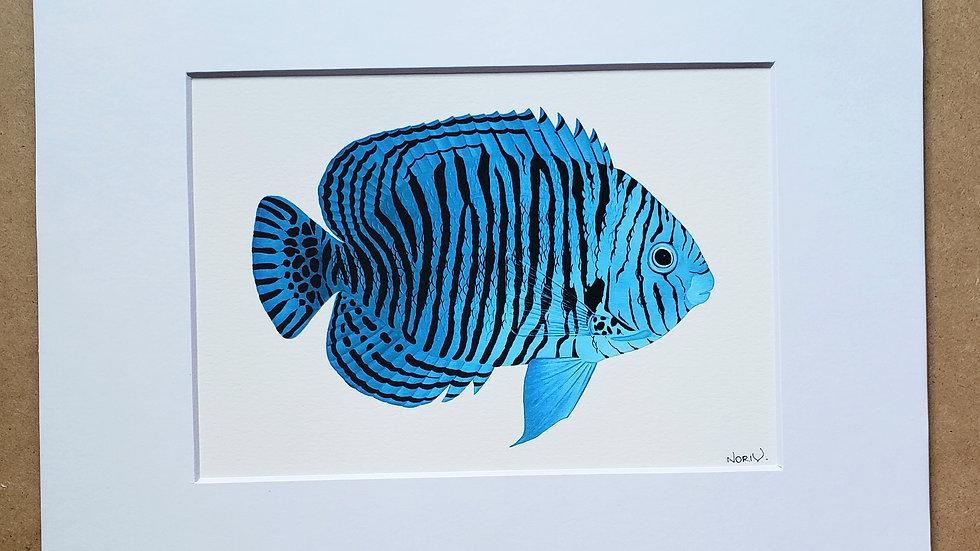 Blue Potters angelfish print