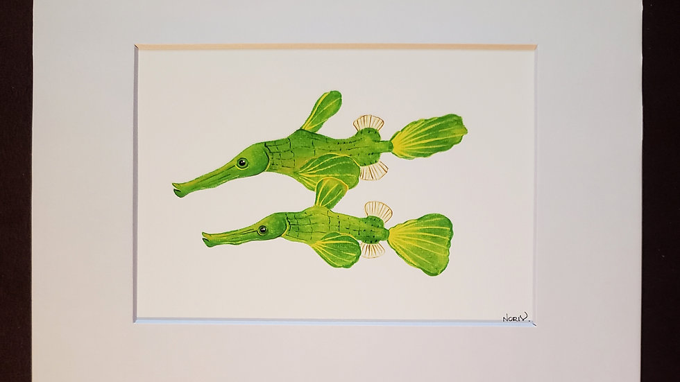 Halemeda ghost pipefish