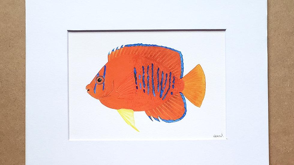 Clarion Angelfish print