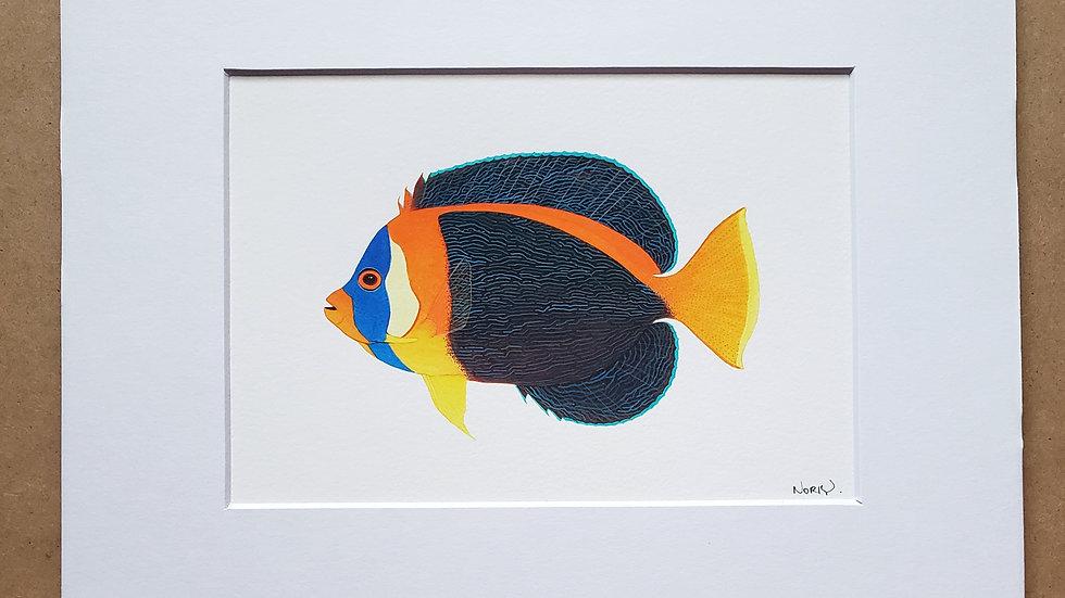 Scribbled angelfish male print