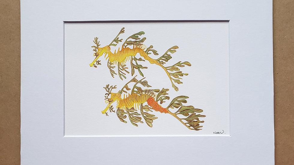 Leafy  Seadragon pair print