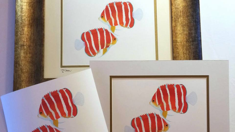 Peppermint angelfish pair