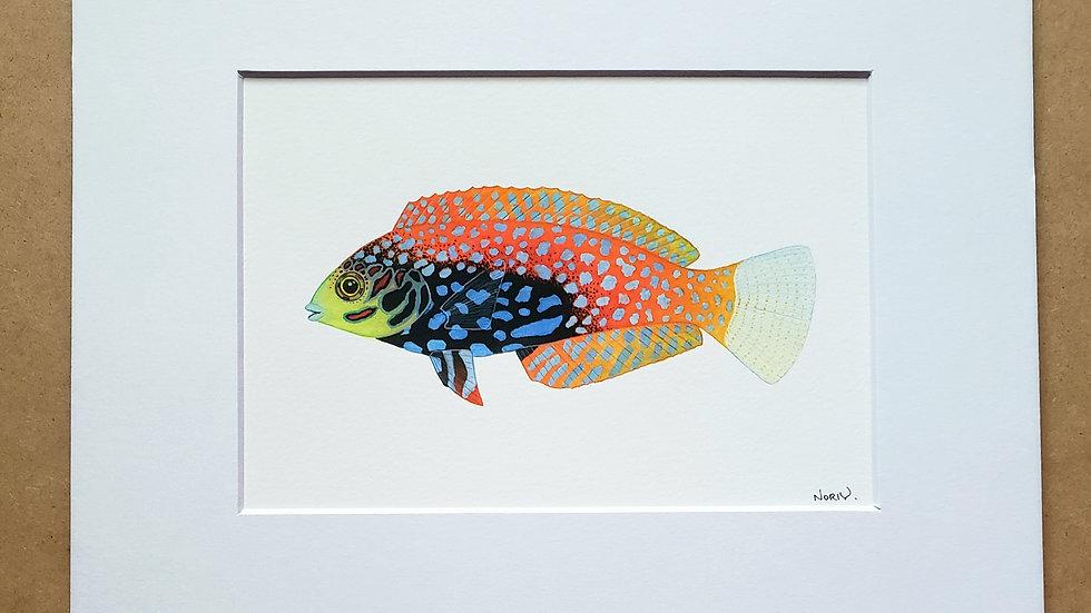 Blue Star Leopard Wrasse print