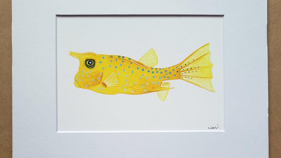 Cowfish print