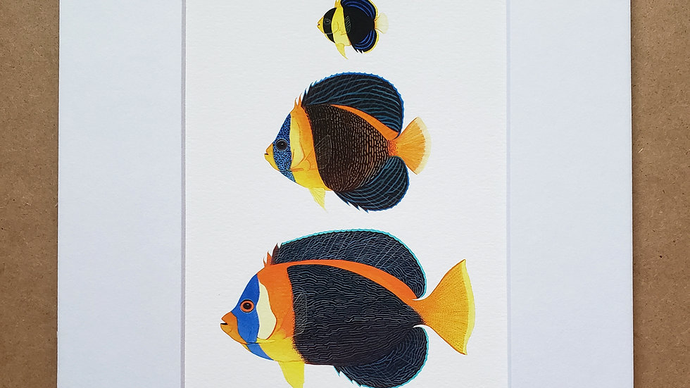 Scribbled angelfish trio print