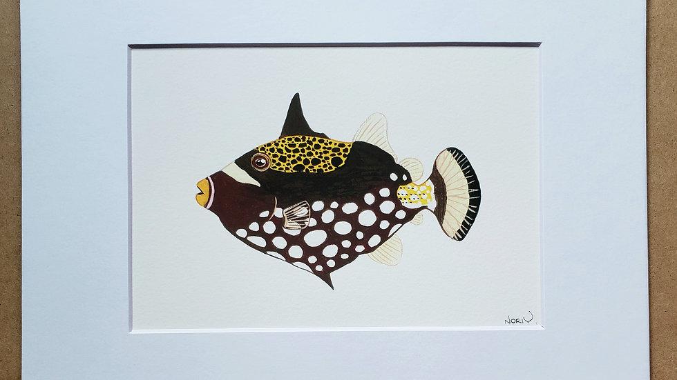 Clown triggerfish print