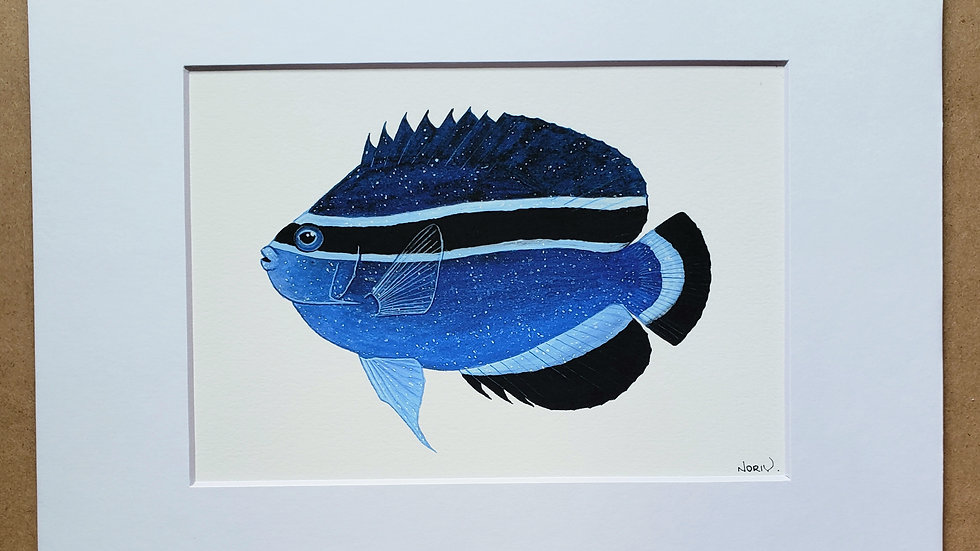 Galaxy Bandit angelfish print