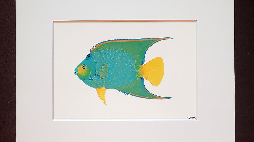 Queen Angelfish print