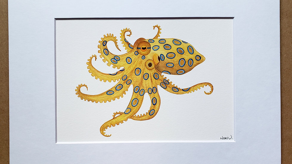 Blue Ring Octopus print