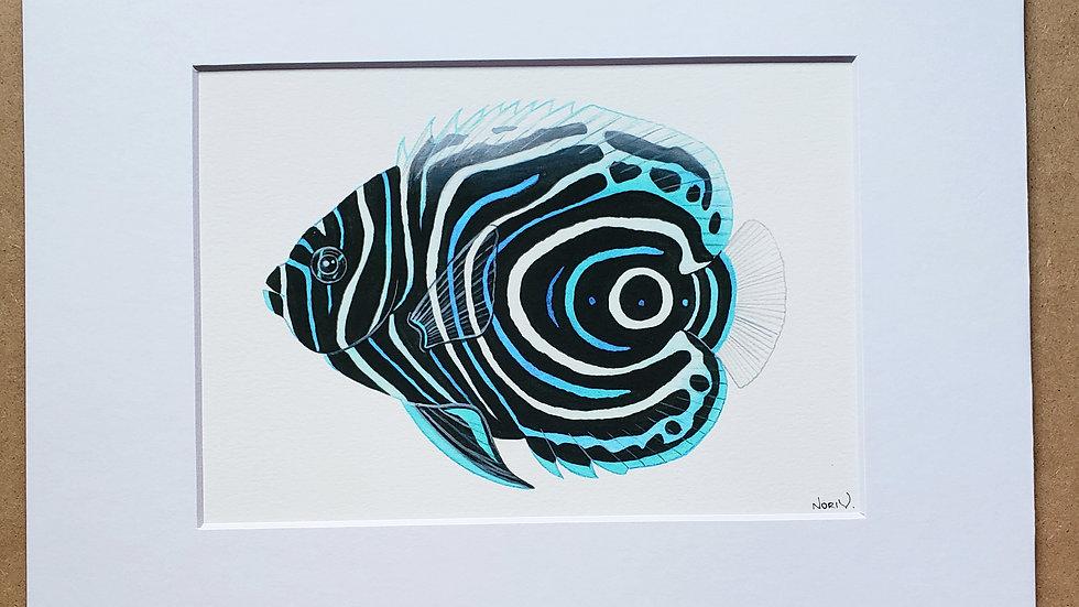 Emperor Angelfish juvenile print
