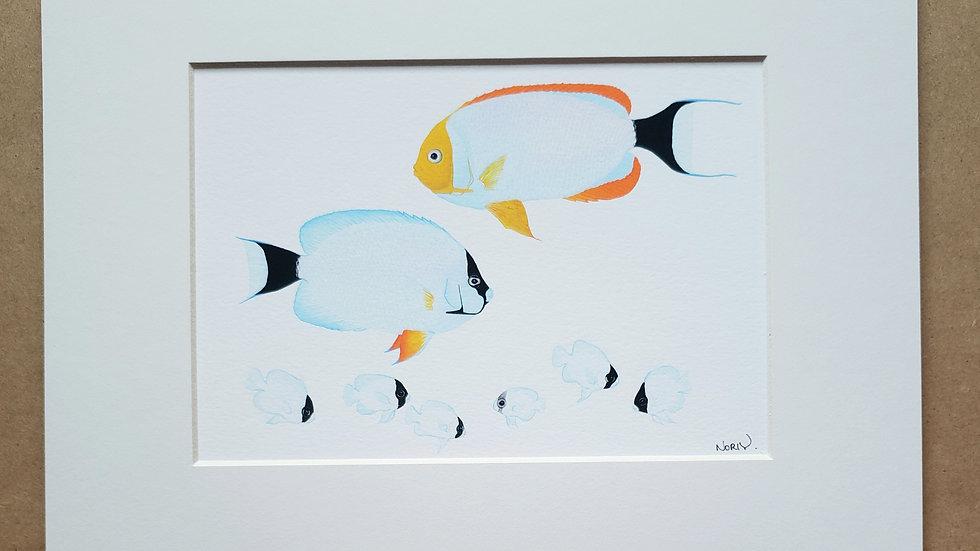 Personatus angelfish group print