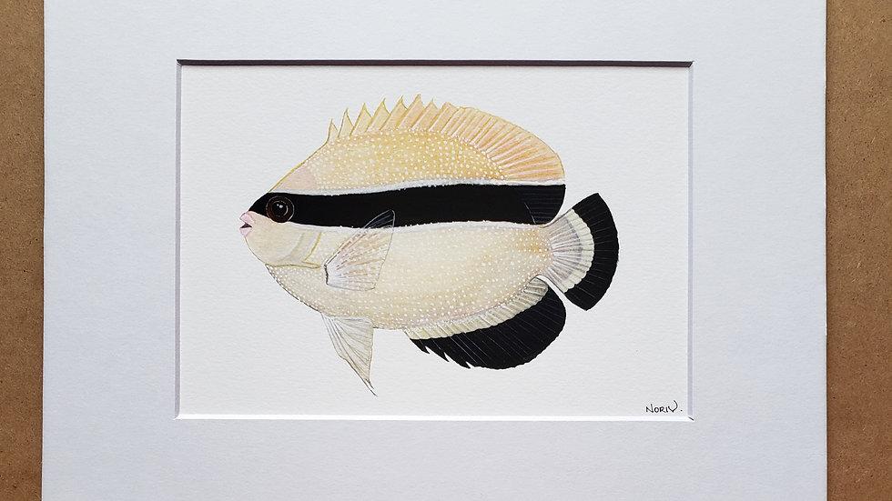 Bandit Angelfish print