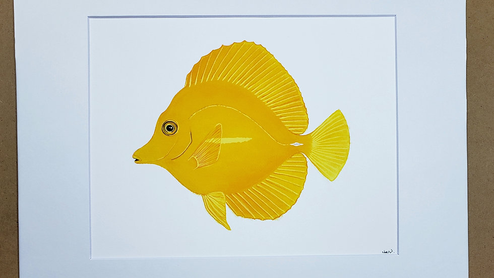 Yellow tang print