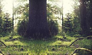 Where does moss grow ?