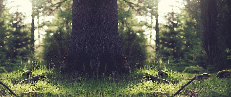 L'arbre qui cache la forêt...
