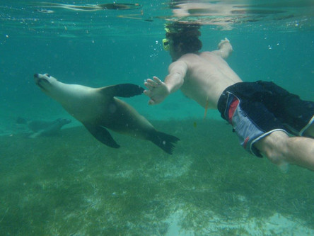 Meet the local sealions