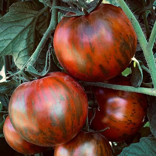"""Black Zebra Tomato - 4"""" pot"""