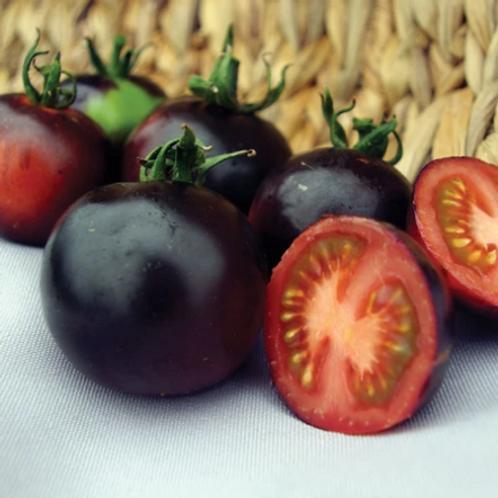 "Indigo Rose Tomato - 4"" pot"