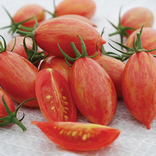 "Pink Tiger Cherry Tomato - 4"" pot"