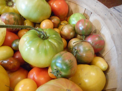 Tomatoes 2021-03-04 at 5.52.02 PM.png