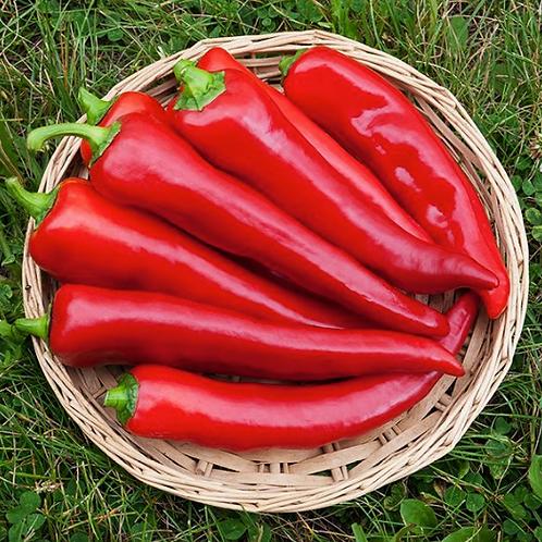 """Corno di Toro Pepper - 4"""" pot"""