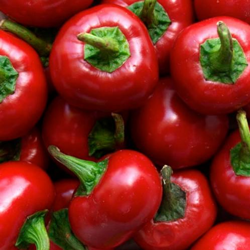 "Hot Cherry Bomb Pepper - 4"" pot"