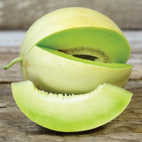 "Honeydew Tam Dew Melon - 4"" pot"