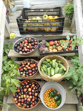 summer produce.jpg