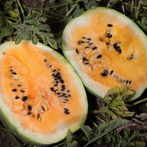 """Desert King Watermelon - 4"""" pot"""