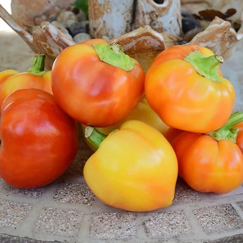 """Alma Paprika Pepper - 4"""" pot"""