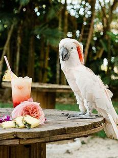 Tropical Bird Event Rentals.jpg