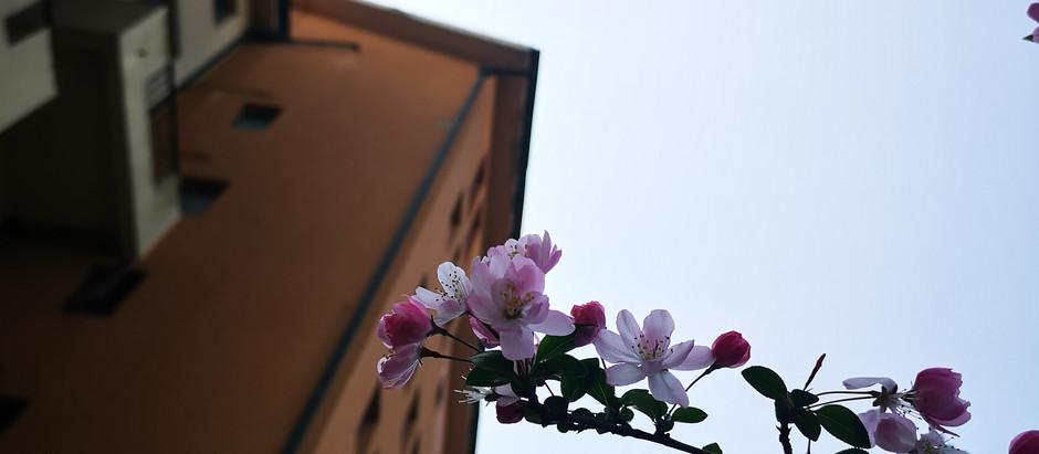SHANGHAI, PÄIVÄ NUMERO 980