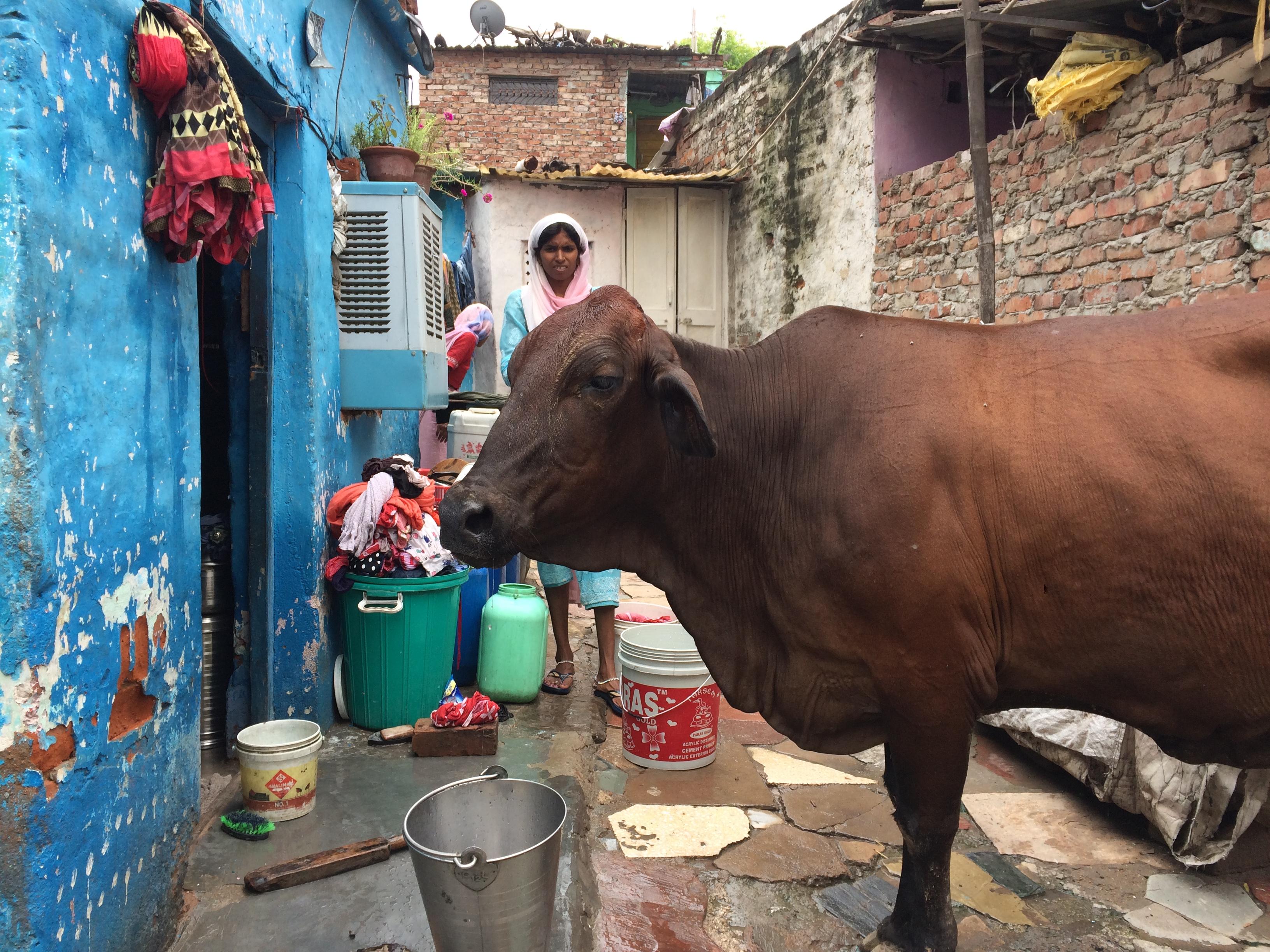 Delhi, India 2016.
