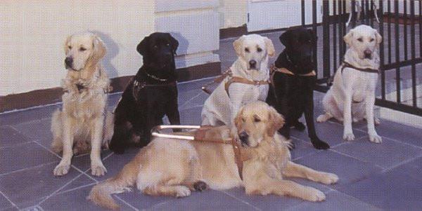 Et utvalg førerhunder