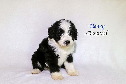 Henry6.jpg