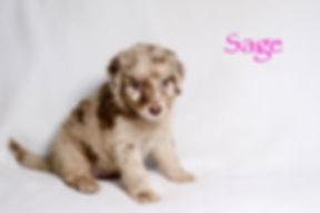 Sage5n.jpg