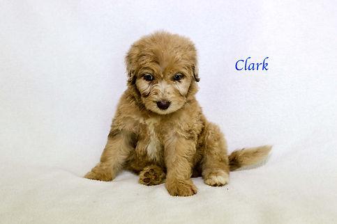 Clark6.jpg