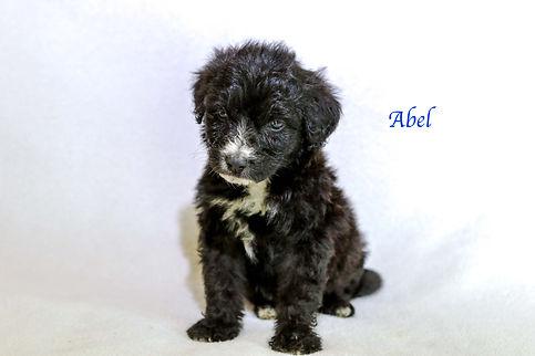 Abel6.jpg